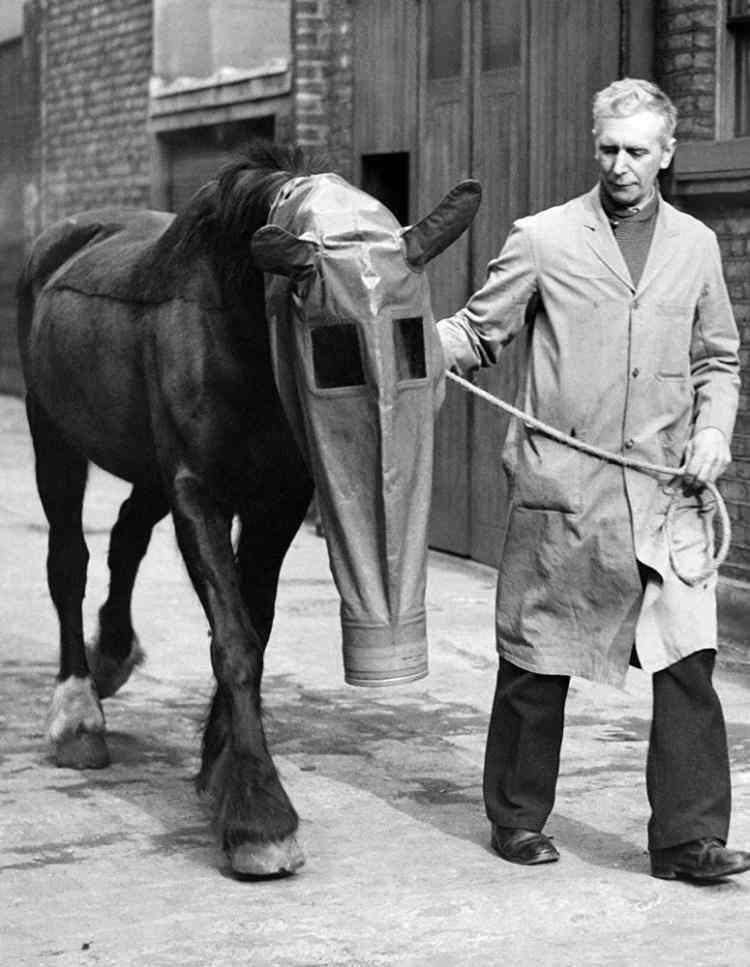 <p>İngiltere'de atların zehirli gaz saldırısına karşı korunması için kullanılan gaz maskesi, Londra, 1940</p>  <p></p>