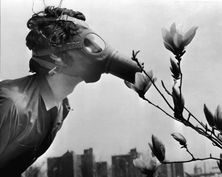 <p>ABD'de Dünya Günü nedeniyle düzenlenen gösteri sırasında çiçek koklayan gaz maskeli öğrenci, 1970</p>  <p></p>