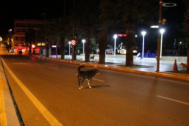 <p>İçişleri Bakanlığının genelgesiyle 30 büyük şehirde sokağa çıkma yasağı ilan edilmesinin ardından yaşanan yoğunluk gece yarısı itibariyle sessizliğe yerini bıraktı.</p>  <p>AYDIN</p>