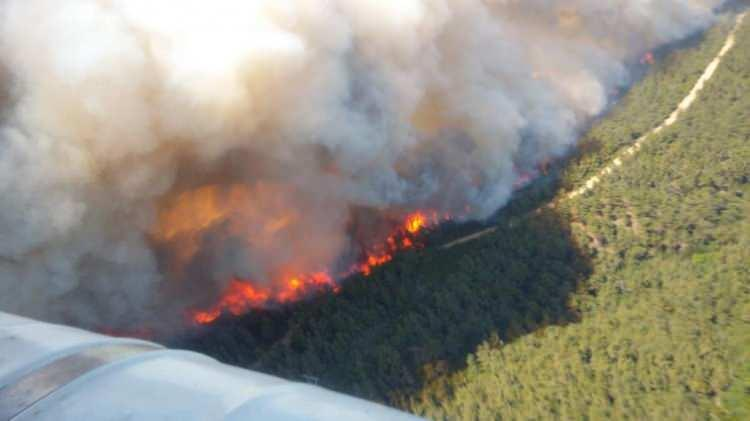 <p>Çanakkale'nin Gelibolu ilçesindeki ormanlık alanda, henüz belirlenemeyen nedenle yangın çıktı.</p>