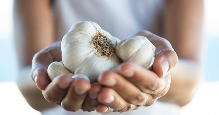 <p><strong>-Damar sertliğini önlüyor:</strong> Kalp sağlığı denince ilk akla gelenlerden biri sarımsaktır. Yapılan çalışmalara göre sarımsak kanda, damar sertliğine yol açan madde olan kolesterolü düşürmektedir. Kandaki iyi huylu kolesterolü (HDL) yükseltip, kötü huylu kolesterolü (LDL) ve trigliseriti düşürmektedir. Kanda oluşan pıhtıları çözen sistemi aktifleştirir ve kanda pıhtılaşmayı sağlayan hücrelerin bu eğilimini azaltır. Dolayısıyla kanı sulandırır. Bütün bu etkiler sarımsağın damar sertliğini önleyici özelliğini desteklemektedir.</p>  <p></p>