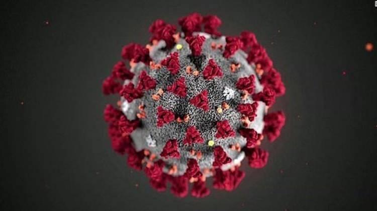 """<p><span style=""""color:#FF8C00""""><strong>EN BÜYÜK ENDİŞEYİ ANTİKORLARIN NASIL TEPKİ VERECEĞİ OLUŞTURUYOR</strong></span></p>  <p>Bilim insanlarına göre söz konusu mutasyonlara ilişkin en büyük endişelerden birini, virüsün daha önceki varyaslarına karşı geliştiren antikorların mutasyona uğramış versiyonu üzerinde etkili olmama ihtimali oluşturuyor.</p>  <p>Antikorlar, daha önce bir hastalık ile karşılaşıldığında bağışıklık sistemi tarafından üretilen ve vücut tekrar corona virüsle karşılaştırdığında hastalığın önlemesini sağlayan protein yapılara deniliyor. Hastalığa daha önce yakalanan veya bir aşı olan kişiler, virüse tekrar yakalandıklarında, böylece hastalanmadan önce ondan kurtulabilirler.</p>  <p>Ancak, uzmanlara göre antikorlar son derece spesifik yapılar ve virüste meydana gelen değişikliklere karşı son derece duyarlı olduklarından çalışmayabiliyorlar. Örneğin gribe neden olan virüs çok sık mutasyona uğradığından insanların gribe karşı bağışıklık kazanamıyor ve hastalığa sürekli olarak yakalanmaya devam ediyor.</p>  <p>Bu nedenle uzmanlar, en kötü senaryoda virüse karşı bir aşının da işe yaramayabileceği veya insanların virüse ikinci kez yakanlama riski olma ihtimalini bulunduğunu ama şu andaki veriler incelendiğinde böyle bir durumun söz konusu olmadığını belirtti.</p>  <p>VİRÜS BU YIL BİNLERCE KEZ DEĞİŞTİ</p>  <p>Öte yandan bazı bilim insanları, İngiltere Sağlık Bakanı Matt Hancock'un dün yeni mutasyon ile ilgili yaptığı açıklamaya tepki gösterek, corona virüsün keşfedildiğinden bu yana binlerce kez değiştiğini ve mutasyonların hiçbirinin onu önemli ölçüde değiştirmediğini vurguladı.</p>  <p>NTV<br /> </p>"""