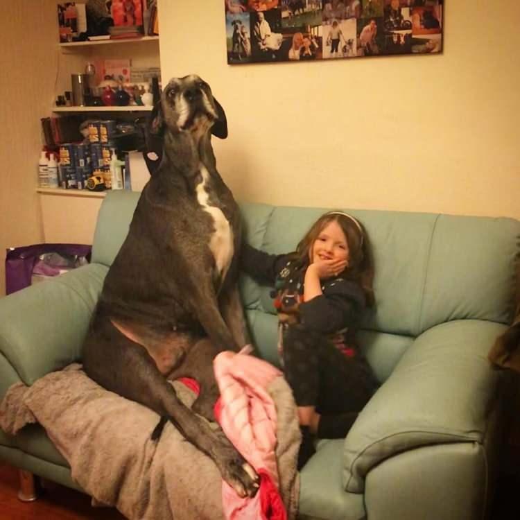 """<p>Stoneman, """"O sadece en uzun köpek değil, aynı zamanda en sevgi dolu ve en büyük kalbe sahip köpekti"""" dedi.</p>  <p></p>"""