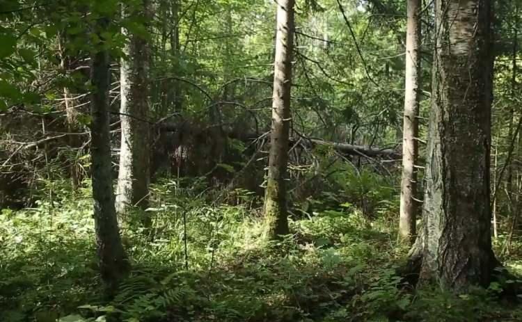Kadın maceracı ormanda streçten öyle bir şey yaptı ki görenler şaştı kaldı!