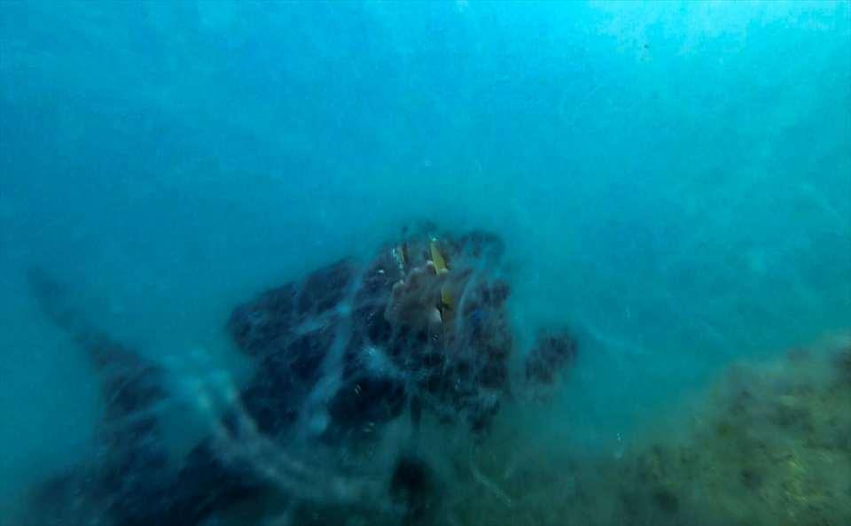 <p>Ercan Akpolat, Serço Ekşiyan, Ateş Evirgen ve AA Foto Muhabiri Şebnem Coşkun'dan oluşan ekip, Tavşan Adası olarak da bilinen Neandros açıklarında, deniz altındaki müsilajı görüntülemek için dalış yaptı.</p>  <p></p>