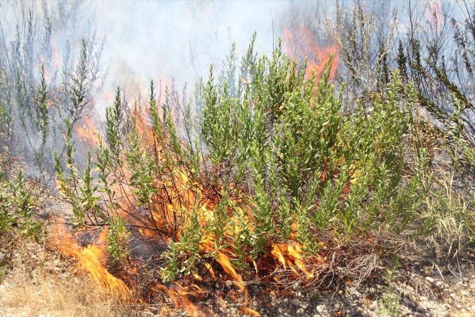 <p>Yangının çıktığı bölge dik yamaç olması dolayısıyla müdahale helikopter ile havadan yapıldı. Şiddetli rüzgarın da etkisiyle hızla büyüyen yangın, Kalemler ve Evrenseki bölgelerine kadar indi.</p>