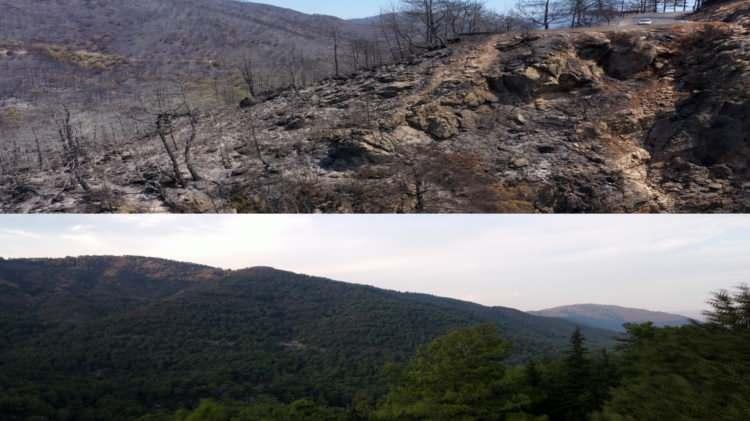 <p>Türkiye'nin ciğerlerinin yandığı Muğla'nın Marmaris ilçesine bağlı İçmeler Mahallesi'ndeki ormanlık alanın öncesi ve sonrası görenlerin yüreğini yaktı.</p>