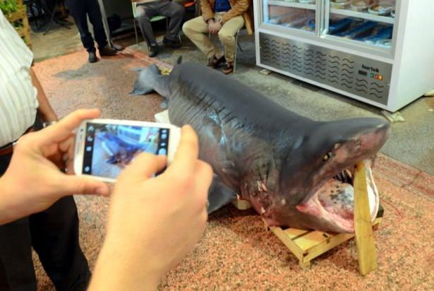 """<p>Osmangazi ilçesinde Tuzpazarı'ndaki bir balık markette sergilenen """"kılıç kuyruk"""" türü köpek balığı, müşterilerin ve çevreden geçen vatandaşların ilgi odağı oldu. Müşterilerin kimi dev köpek balığını uzun uzun inceledi kimi de fotoğrafını çekti.</p>  <p></p>"""