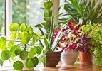 Evinizi böceklerden koruyacak bitkiler
