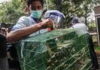 Endonezya'da koruma altındaki türleri kaçırmaya çalışan hayvan kaçakçıları yakalandı