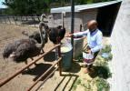 Patates üretimini bırakıp devekuşu çiftliği kurdu! Yıllık 300 bin lira ciro elde ediyor