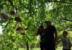 Askıda kurbanlık! Kurban etlerini poşetlere koyup bahçesindeki ağaca astı