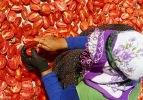 Ege'nin kurutulmuş domatesi dünya mutfaklarında