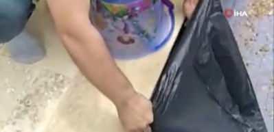 1,5 metrelik engerek yılanını plastik kovayla yakaladı