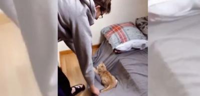 Kedinin çarşafla eğlenceli oyunu