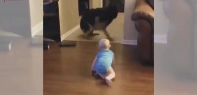 Bebeğin köpekle kovalamaca oynadığı anlar...