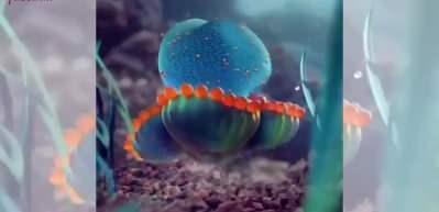 Bildiğimiz denizanalarından çok farklı...