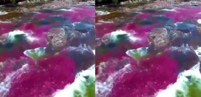 Bu nehir adeta bir gökkuşağı! Cano Cristales görenleri büyülüyor