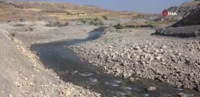 Kahta Çayı'nda binlerce balık telef oldu