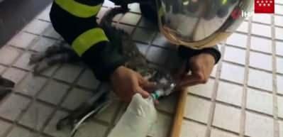 Dumandan etkilenen kedi, oksijen maskesi ile hayata döndü