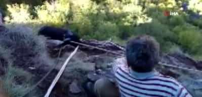 Kayalıklarda mahsur kalan keçiler 3 gün sonra dağcılar tarafından kurtarıldı