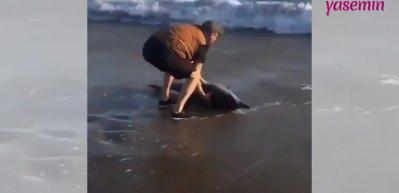 Kıyıya vuran yunusun kurtarılma anı