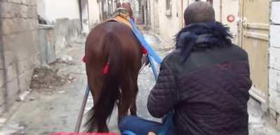 40 yıldır at üstünde çalışarak ailesinin geçimini sağlıyor