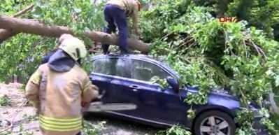 Ataşehir'de ağaç otomobilin üstüne devrildi