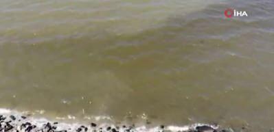 Küçükçekmece Gölü'ndeki balık ölümleri! Bakanlık harekete geçti