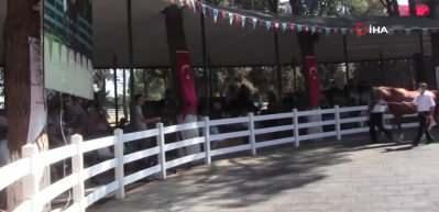 Bursa'da şoke eden olay! At bakıcısını böyle tepti
