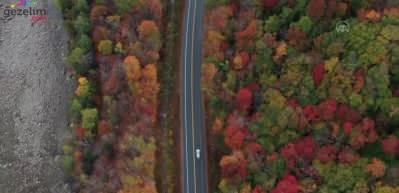 ABD'nin New Hampshire eyaletinde sonbahar manzaraları