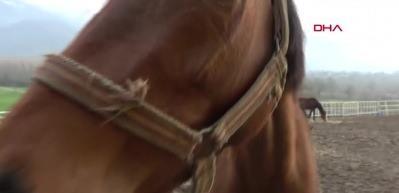 At pansiyonunda 5 yıldızlı hizmet