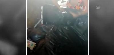 Barınaktaki köpekler bakımsızlıktan öldü