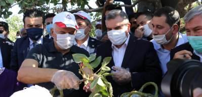 Binali Yıldırım Şanlıurfa'da fıstık topladı