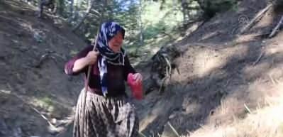 Bolu'da kurt sürüsü saldırdı, 21 koyun telef oldu