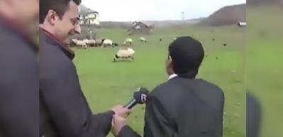 Çobanın koyunlara hitabı izlenme rekorları kırıyor