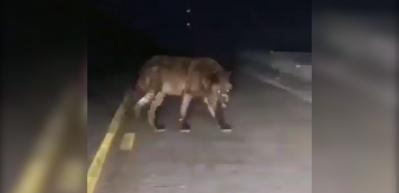 """""""Daha önce böyle bir kurt görmedim!"""""""