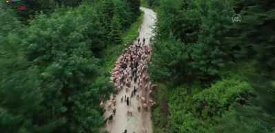 Doğa turizminin gözdesi Sakarya yaylaları