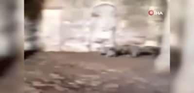 Ermenistan camiyi ahıra çevirdi