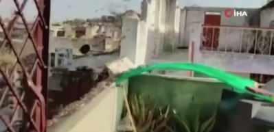 Hindistan ve Pakistan'da çekirge istilası