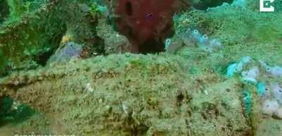 İşte dünyanın en zehirli balığı! Endonezya'da görüntülendi...