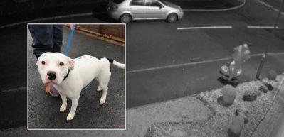Köpeğini böyle terk etti! Sosyal medyada tepki çekti