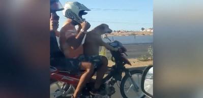 Motosikleti köpeğe sürdürdüler! Pes dedirten görüntü