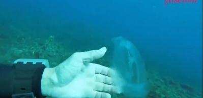 Okyanusun derinliklerindeki hayalet balık Salpidae ilk kez yakındna görüntülendi!
