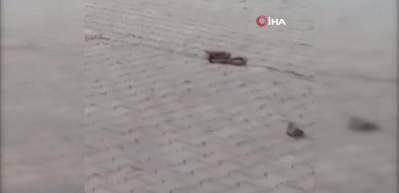 Otomobilde yılan sandıkları 1,5 metrelik sürüngen kertenkele çıktı