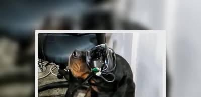 Patlayıcı arayan köpeklere son teknoloji