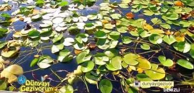 Nilüfer çiçekleriyle bezeli Işıklı Göl