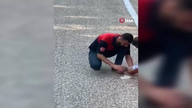 Yangından kaçan yavru kaplumbağaya elleriyle su verdiler