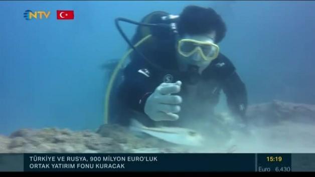 Uzmanlardan balon balığı uyarısı