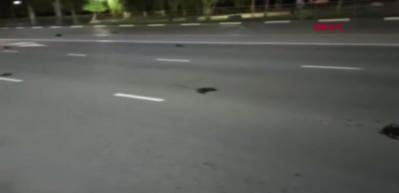 Rusya'da caddedeki ölü karga sürüsü korkuya neden oldu